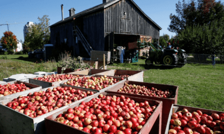 Applefest at Markham Museum