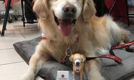 Getting to know Smiley, the furry celebrity