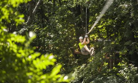 Treetop Trekking adventures await