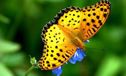 Mourners to gather for butterfly release event