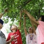 Markham Museum hosts 34th annual Applefest