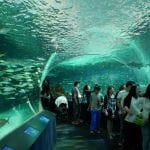 Canada's largest indoor aquarium to welcome milestone guest