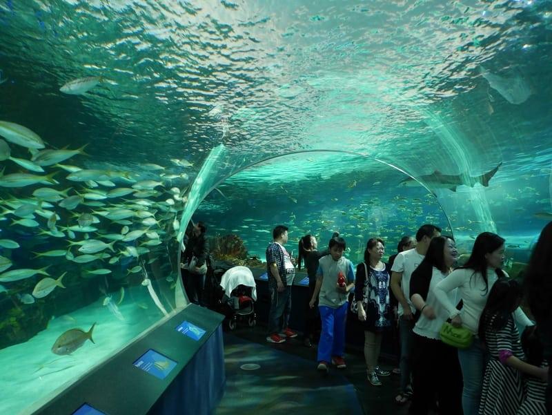 Canada's largest indoor aquarium to welcome milestone guest