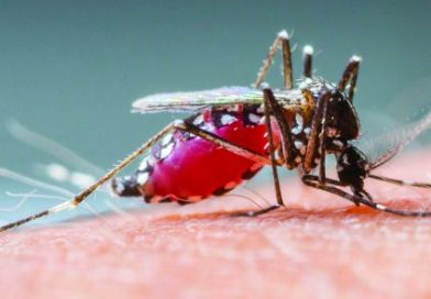 Mosquito trap tests positive for West Nile virus