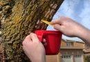 Scrape away invasive moth eggs